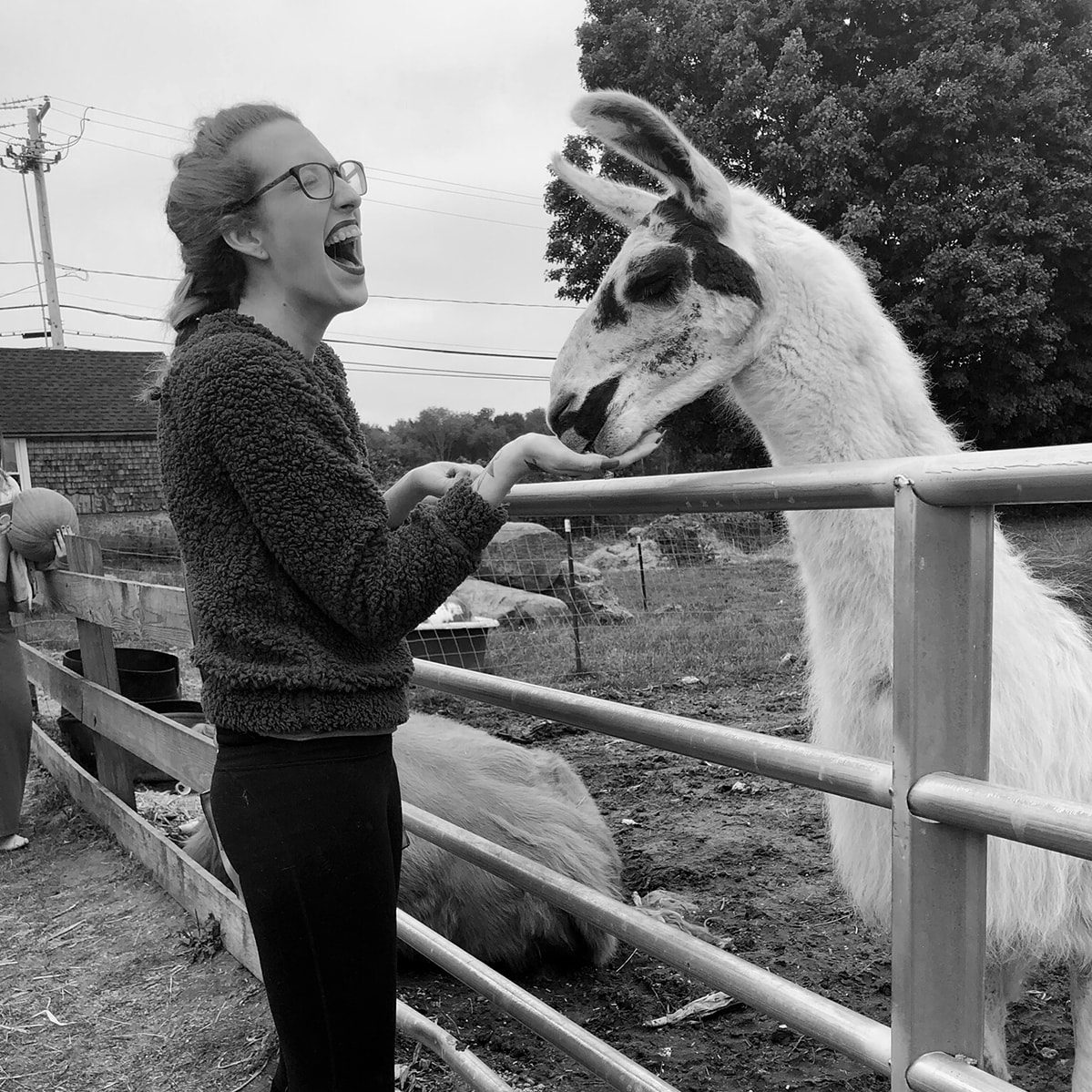 Black and white image of Kyri laughing while petting a llama